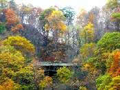 Palisades New York Fall Foliage